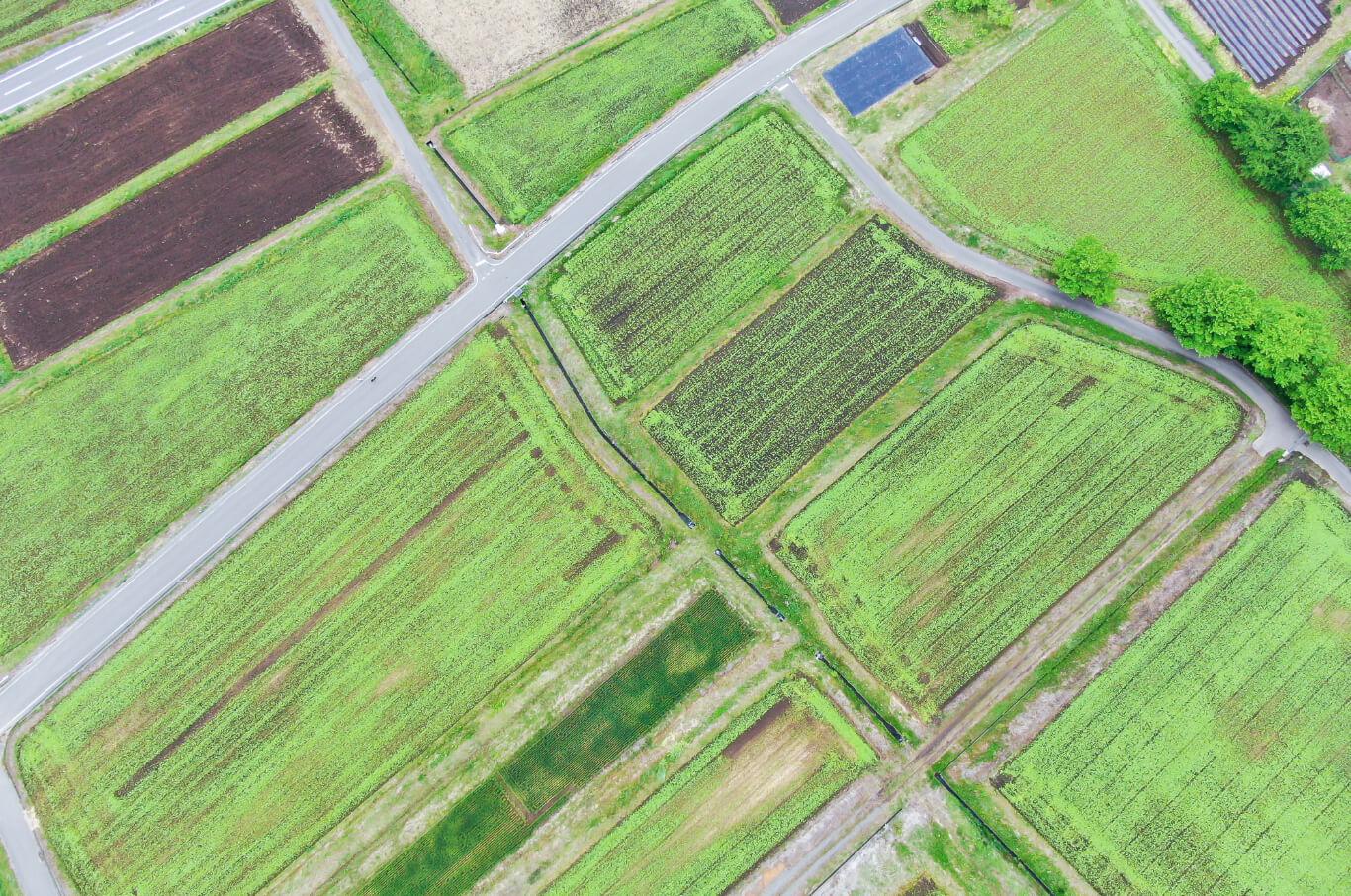 農業センシング